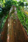 Giungle tropicali del sud-est asiatico — Foto Stock