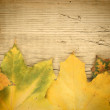 Autumn maple leaves on old wooden board — Stock Photo #24077961