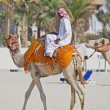 Bedouin riding camel on beach in Dubai — Stock Photo #24313751