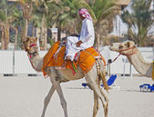 Bedouin riding a camel on the beach in Dubai — Stock Photo