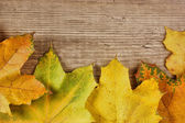 Autumn maple leaves on old wooden board — Stock Photo