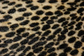 Faux leopard fur texture background — Stock Photo