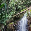 Waterfall in the tropical jungles — Stock Photo