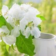 Bird cherry branch in a jug on the window — Stock Photo
