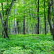 Stock Photo: Spring forest