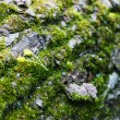 Closeup of moss on a tree trunk — Stock Photo