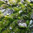 Closeup of moss on a tree trunk - Stock Photo