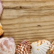 Frame of sea shells on old wooden board — Stock Photo