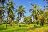 Tropical landscape in Phuket Thailand — Stock Photo