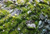 Крупным планом мох на стволе дерева — Стоковое фото
