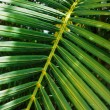 Palm leaf — Stock Photo #26120297