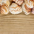 Sea shells on old wooden board — Stock Photo #29506371