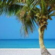 Stock Photo: Lone Palm tree on beach