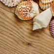 Sea shells on old wooden board — Stock Photo #32120899
