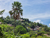 Tropical landscape in Phuket Thailand — Stock Photo