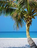 Lone Palm tree on the beach — Stock Photo