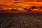 Landscape plowed field, sunset — Stock Photo