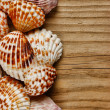 Sea shells on old wooden board — Stock Photo #32572517