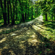 Deserted path in the pine forest — Stock Photo