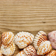 Sea shells on old wooden board — Stock Photo