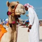 Arab man and camel on the beach in Dubai — Stock Photo