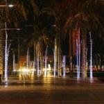 Palm alley in Dubai — Stock Photo