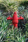 A red fire hydrant against a green lawn — Stock Photo
