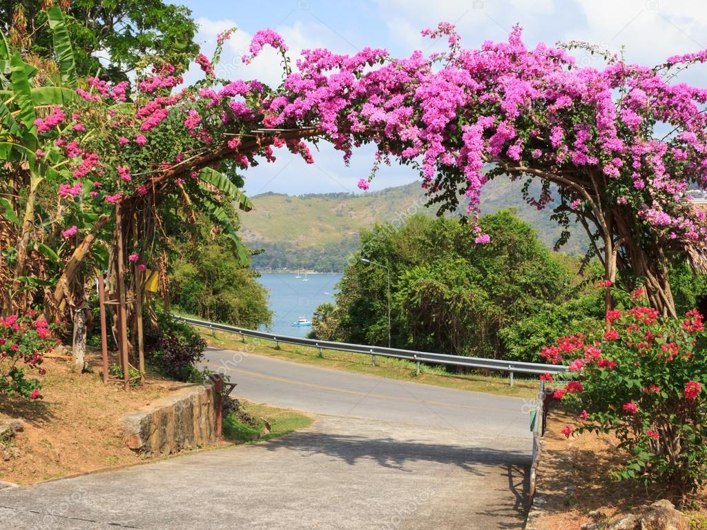 Arco de flores roxas no jardim na entrada fotografias de for Arcos de jardin