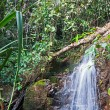 Waterfall in the tropical jungles — Stock Photo #37778929