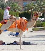 Arab man sitting on a camel on the beach — Stockfoto