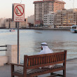 Evening view on the waterfront Bay Creek Dubai UAE — Stock Photo