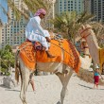 Arab man and camel in Dubai — Stock Photo