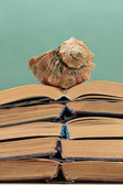 Old books on a wooden shelf and seashell — Stock Photo
