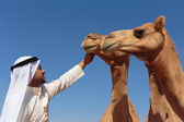 Portrait of a young Arab with a camel in the desert — Stock Photo