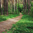 Stock Photo: Deserted path in pine forest