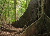 Tropical jungles — Stock Photo