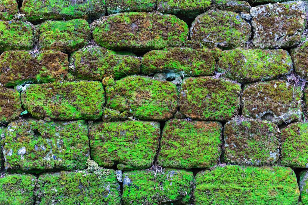 картинки  лес трава растение текстура лист асфальт