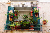 Window  decorated with flower pots — Stock Photo
