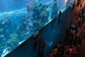 Dubai Aquarium inside Dubai Mall — Stock Photo