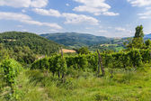 Vineyards in Tuscany — Stockfoto