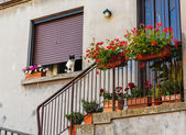 Street   in Italy — Stock Photo