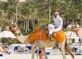 Arab man   on  camel — Stock Photo