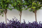 Trees and bushes — Stock Photo