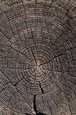 Old wood cut — Stock Photo