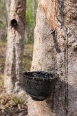 タイ南部でゴム製木 — ストック写真