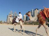 Arab man sitting on a camel on the beach — Stock Photo