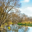 Non leafy trees on small river — Stock Photo