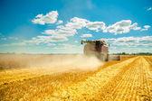 зерноуборочный комбайн в работе — Стоковое фото