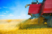 grinding of wheat at harvest — Stockfoto
