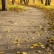 Small road in autumn forest — Stock Photo